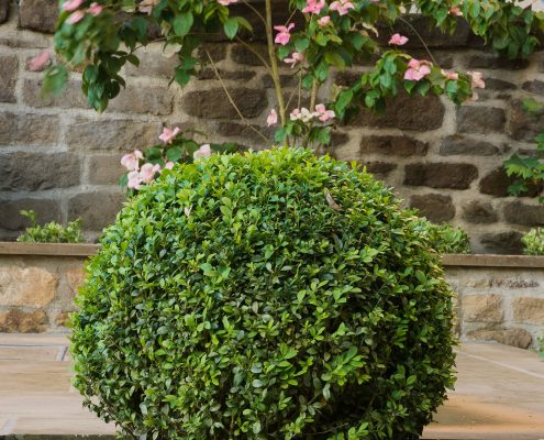 Planting Topiary courtyard Yorkshire