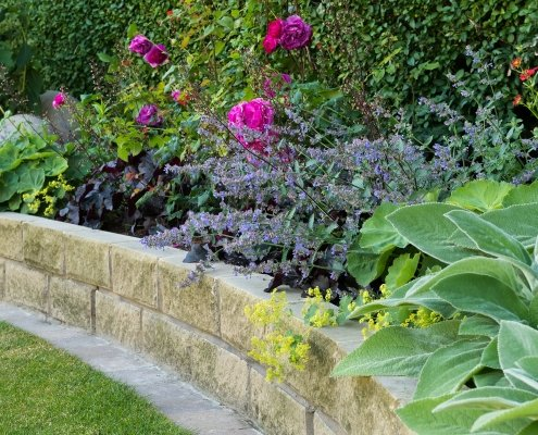 Planting Design and Advice Ilkley Yorkshire Combinations David Austin roses