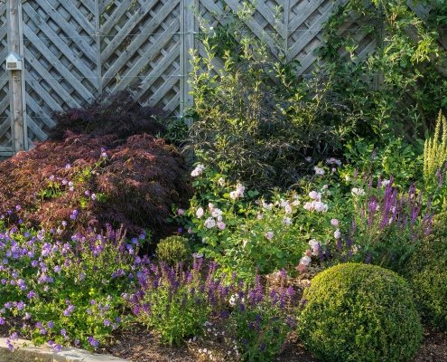 Planting Design and Advice Ilkley Yorkshire Combinations Topiary David Austin Roses