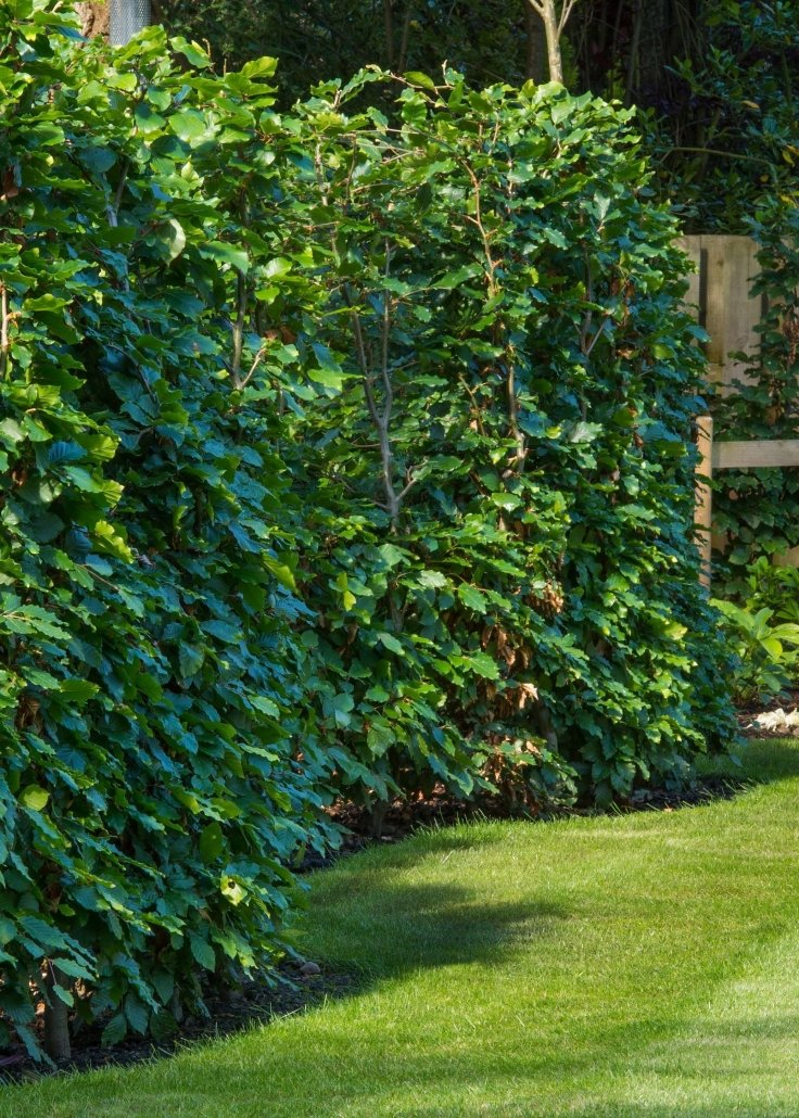Colour Science In Garden Design & How Hue Can Influence