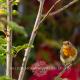 Garden Advice Consultation Design Tips Skipton Ilkley Otley Menston